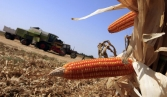 GMOs linked to gluten disorders plaguing 18 million Americans